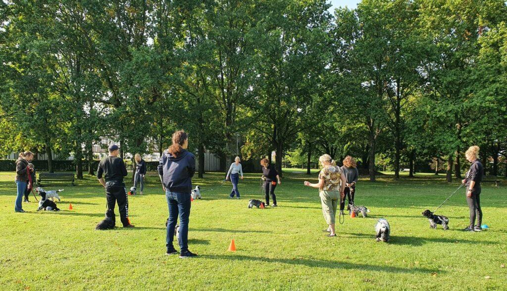 hundetræning hvalpetræning