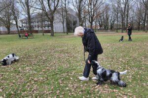 hundetræning amager hvalpetræning hund træning københavn